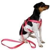 Guia para Cachorro RL121
